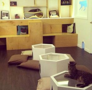 Meow Parlour Cat Cafe, NYC