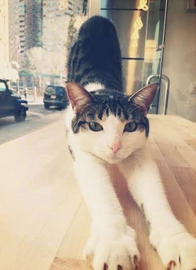 Spot at Meow Parlour
